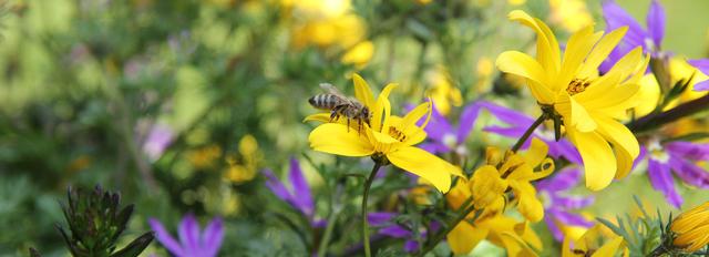 Ein Balkonkistel für Insekten
